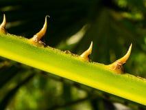 Free stock photo of vegetation, leaf, macro photography, flora Stock Photos