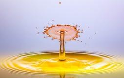 Free stock photo of water, drop, macro photography, liquid Royalty Free Stock Photography