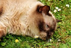 Free stock photo of whiskers, fauna, cat, grass Stock Photography