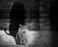 Free stock photo of white, black, photograph, black and white Stock Image