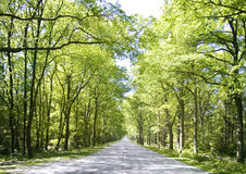 Free straight country road in summer Royalty Free Stock Photography