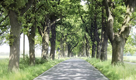 Free straight country road in summer Stock Image