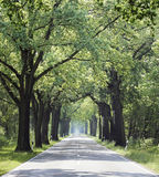 Free straight country road in summer Stock Images