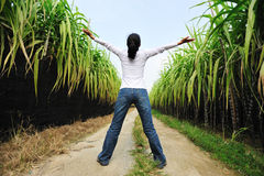 free in sugarcane field Royalty Free Stock Photos