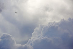 Free to Soar. Cumulus clouds- small bird soaring above Stock Photos