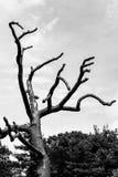 Free tree Stock Photography