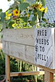 Free weeds to pull sign at a community garden. Cheerful free weeds to pull sign on a wood planter box at a community garden with sunflowers in background stock photos