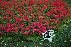 Free Wi-Fi on the background of red flowers. Stock Photos