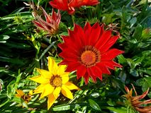 Free and wild flowers in South Africa