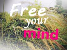 Free your mind typing with cogon grass in the background stock illustration