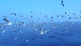 Freebird 免版税图库摄影