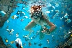 Freedive Stock Image