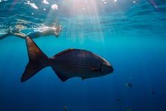 Freediver与热带鱼的人游泳在海 免版税图库摄影
