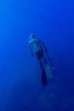 Freediver Royaltyfria Foton