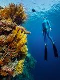 Freediver zdjęcia stock