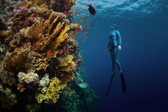 Freediver Fotografia Stock