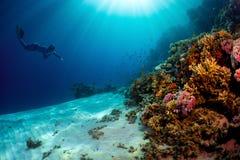 Freediver fotografie stock libere da diritti