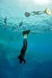 Freediver beginnt seinen Sturzflug von der Oberfläche lizenzfreie stockfotografie