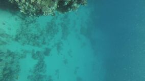 Freediver on corals in Red sea, Dahab Egypt, Man swimming underwater in blue sea water, 4k
