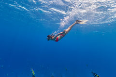 Freediver descends into Blue Water. Freediver woman descends into deep blue water Stock Photography