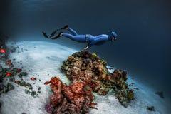 Freediver di signora che scivola underwater Fotografia Stock