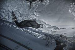 Freediver dinamico con la prestazione di Monofin da Underwater Immagini Stock