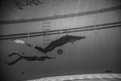 Freediver Dynamic with Monofin Performance from Underwater. MONTREAL, CIRCA JUNE 2014 - Two Hot Spring Days of Freediving Competition at Jean-Drapeau 50m Outdoor royalty free stock image