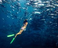 Freediver and fish. Young lady diving by the school of Jack fish on the single breath Stock Photography