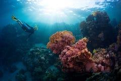 Freediver. Free diver exploring vivid coral reef in tropical sea Stock Photo