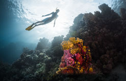 Freediver. Free diver exploring vivid coral reef in tropical sea Royalty Free Stock Photography
