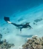 Freediver girl investigates a coral reef Stock Photo