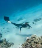 Freediver girl investigates a coral reef. Near the Red Sea bottom stock photo