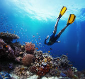 Freediver Royalty Free Stock Photo