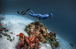 Freediver gliding underwater. Over vivid coral reef Stock Images