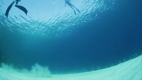 Freediver makes ring bubble underwater. Set of clips of ring bubbles move in a water stock video footage