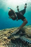 Freediver man with hawksbill turtle, underwater photography. royalty free stock photo