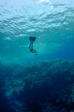 Freediver moves underwater along coral reef. The freediver moves underwater near the coral reef at the depth of Blue Hole. Read Sea, Egypt Royalty Free Stock Photos