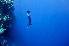 Freediver moves underwater along coral reef. The freediver moves underwater near the coral reef at the depth of Blue Hole. Read Sea, Egypt Royalty Free Stock Photography