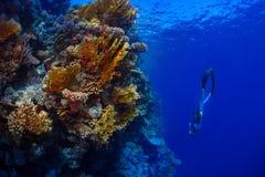 Freediver no mar Foto de Stock