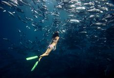Freediver och fisk royaltyfri fotografi