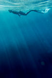 Freediver swim in the sea. Freediver in wetsuit neoprene swim in the sea Stock Photo