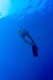Freediver Stock Image