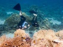 Freediver twee duikt tussen koralen Stock Foto's
