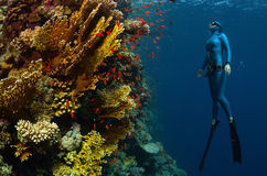 Freediver. Underwater shot of the lady free diver ascending along the vivid coral reefs. Red Sea, Egypt