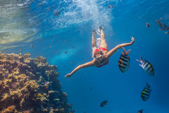 Freediver woman exploring coral Stock Images