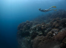 Freediver Stock Photos