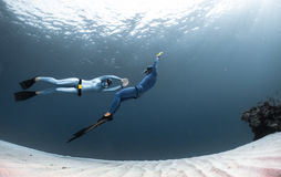Freedivers in the sea. Two freedivers finning over the sandy sea bottom Stock Image