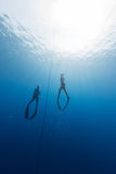 Freedivers Stock Image