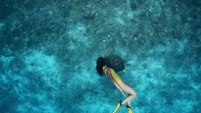 Freediving or snorkeling trips. Large turtle and young girl swimming underwater together in slow motion. Active holidays