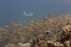 Freedivng στο νησί Kood Στοκ φωτογραφίες με δικαίωμα ελεύθερης χρήσης